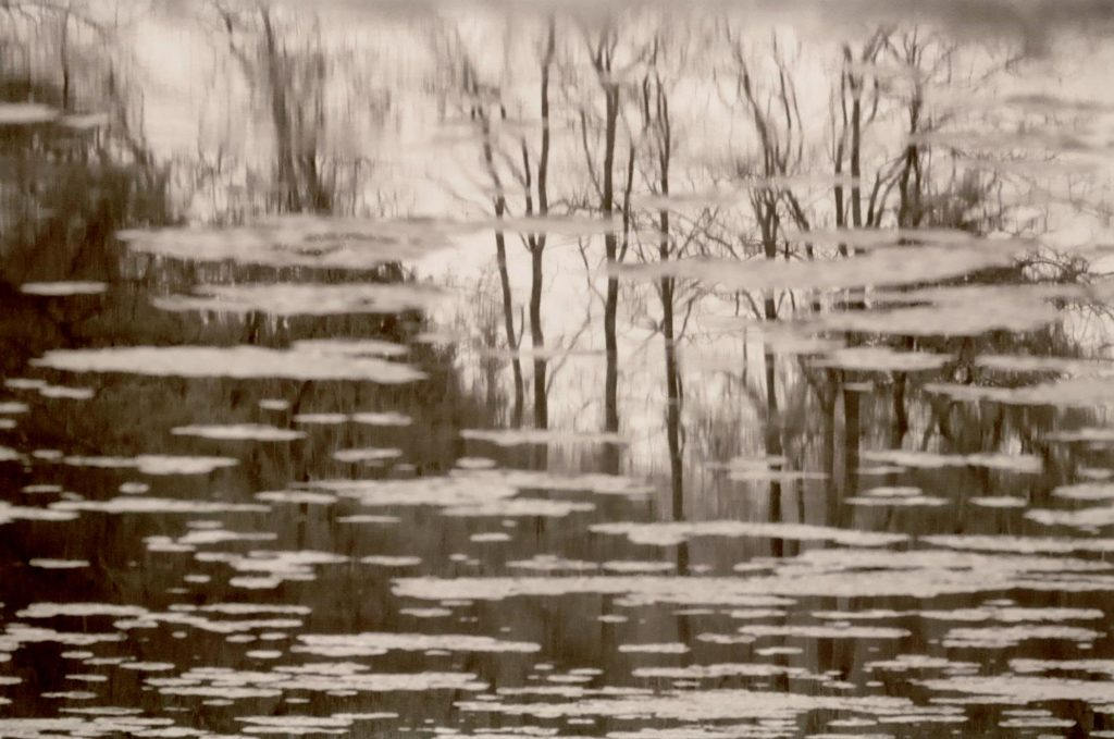 Photo by Aly Tharp; Image of trees reflected in water; taken with black and white film and telephoto lens